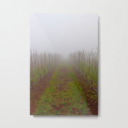 foggy in a wine vinyard in dundee Metal Print