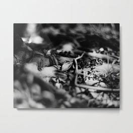 FALLEN SILVER - Fomapan Creative 200 (4x5 film) Metal Print