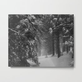 Winter Snow Metal Print