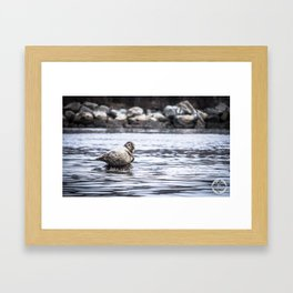 Chillin' Seal in the Cove Framed Art Print