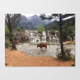 Cows in the River Canvas Print