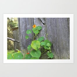 The Garden Wall Art Print