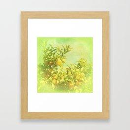Mandarine Tree Framed Art Print