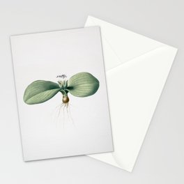 Vintage Massonia Pustulata Illustration Stationery Cards