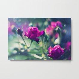 Beautiful Fuchsia Roses Metal Print