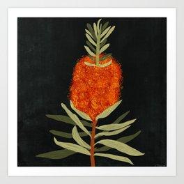 Bottlebrush Flower Art Print