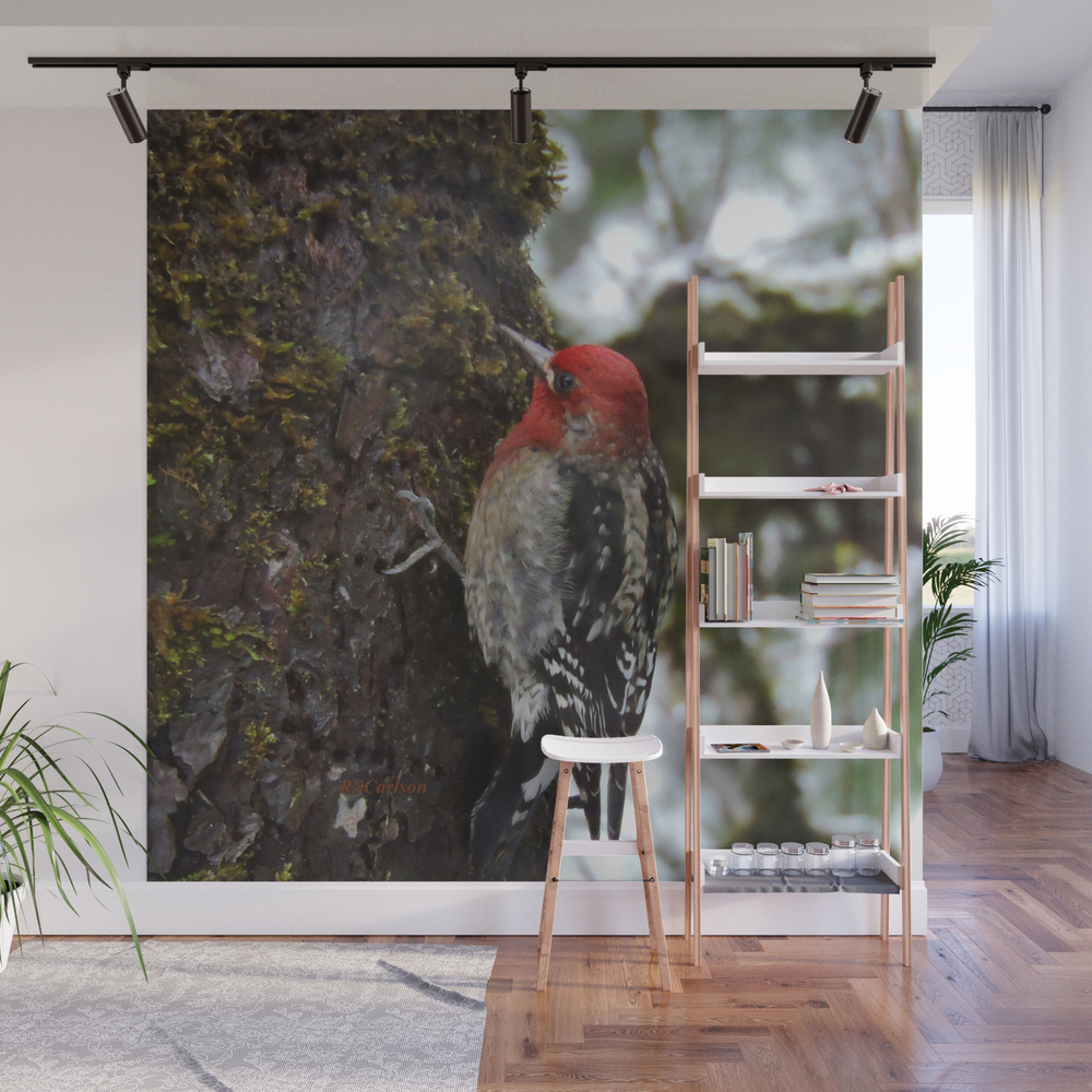 Red-Breasted Sapsucker in Christmas Snow Wall Mural by rscarlson (WMP4016012) photo