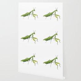 Cute Praying Mantis Love Funny Praying Mantis Wallpaper