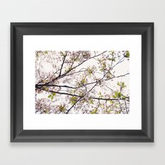 Cherry Blossoms '14 Framed Art Print