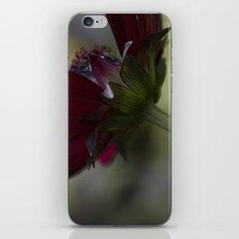 Chocolate Cosmos iPhone Skin