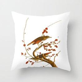 Hermit Thrush Bird Throw Pillow