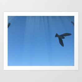 flying to the other side Art Print