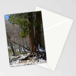 Forest Falls Stationery Cards