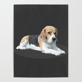 Beagle Dog #3 Poster