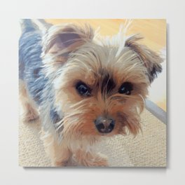 Yorkie   Dogs   Terrier   Pets   Humor   What!?! (with text) Metal Print