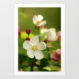 Budding trees Art Print