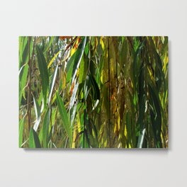 Weeping Willow in Autumn Metal Print