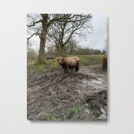 calm collected bull Metal Print