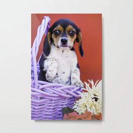 Tricolor Beagle Puppy Holding up Her Paw in a Purple Basket with Flowers in Front of Red Background Metal Print