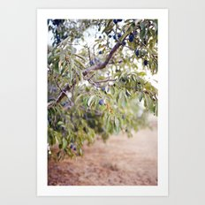 PLUM FARM Art Print