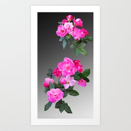 Roses for Days Art Print