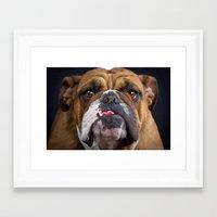 british Framed Art Prints featuring British Bulldog by Best Light Images