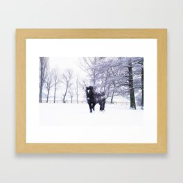 Black beauty horse in winter landscape Framed Art Print