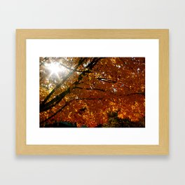 Season On Fire  Framed Art Print