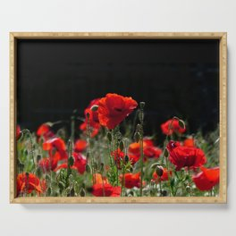 Red Poppies in bright sunlight Serving Tray