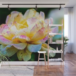 Yellow Rose Flower With Red Freckles Wall Mural