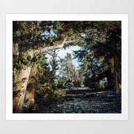 Hall of Bristlecone Pine Art Print
