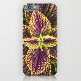 Plant Patterns - Coleus Colors iPhone Case