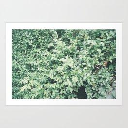 P_03 Art Print