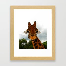 Giraffe. Framed Art Print