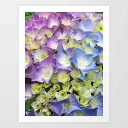 AZISAI/紫陽花 Art Print