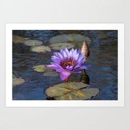 Purple Water Lily Art Print