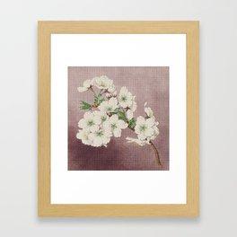 Shirayuki - White Snow Cherry Blossoms Framed Art Print