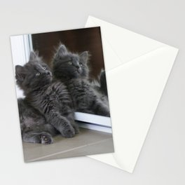 Seeing Double Kitten Mirror Reflection Digital Pet Photography Stationery Cards