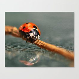 Lady Bug with Reflection Canvas Print