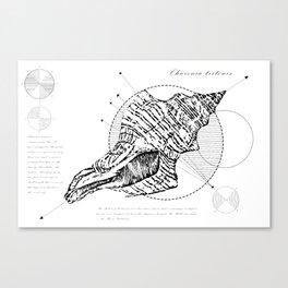 Geometry of a Charonia tritonis Canvas Print