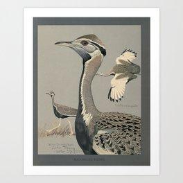 Fuertes,Louis Agassiz 1874-192 -Album of Abyssian birds Art Print