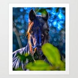 Mylor Walk - Broads Lane Horse Art Print
