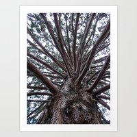 Branches in Time Art Print