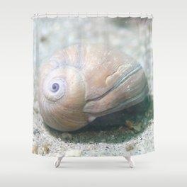 White Seashell Shower Curtain