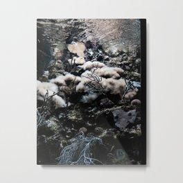 The Life Aquatic (3) Metal Print