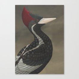Ivory-billed Woodpecker (Campephilus principalis) Canvas Print