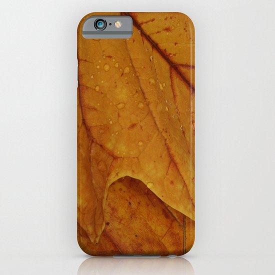American Tulip Poplar Leaves iPhone & iPod Case
