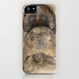 Humorous Mating Tortoises iPhone Case