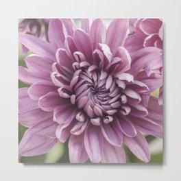 Soft Pink Mum, Nature Photography, Flower, Floral Print, Flower Print, Nature Print, Macro Art Metal Print
