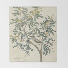 Robert Jacob Gordon - Acacia karroo Hayne or Vachellia karroo - 1777-1786 Throw Blanket